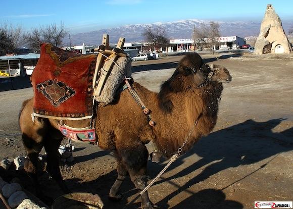 Pasabag Cappadocia camel