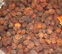 Sun dried apricot with pit