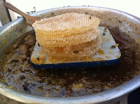 Honey on comb