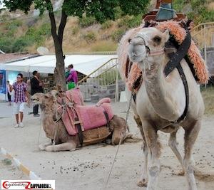 Goreme Open air museum camels in Cappadocia