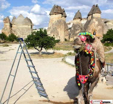 Pasabag camels in Cappadocia with fairy chimneys