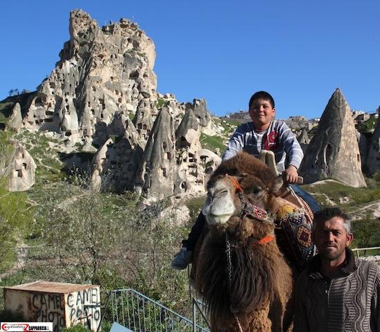 Uchisar camels in cappadocia face