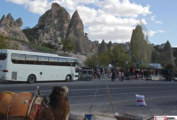 Uchisar camels in cappadocia