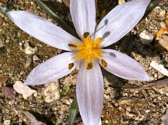 Spring Has Sprung in Cappadocia