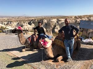 Camels in cappadocia